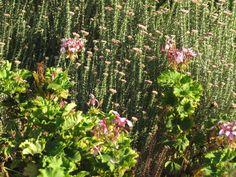 The Indigenous Gardener web magazine South Africa Web Magazine, South Africa, Landscaping