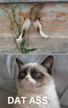 54 Best Grumpy Cat images in 2016 | So funny, Funny stuff