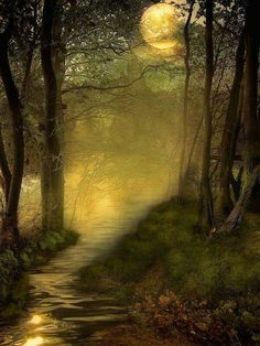 Fairy Tales of the Secret Forest