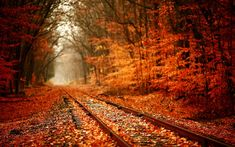 What is it about railroad tracks that draws us to think of hopes and dreams ahead of us? Brilliant orange and red fall leaves decorate the autumn woods and train tracks. Share Pictures, Fall Pictures, Autumn Photos, Track Pictures, Paris Pictures, All Nature, Autumn Nature, Train Tracks, Train Rides