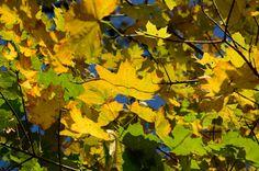 Poland, Rogalin. Polish Golden Fall