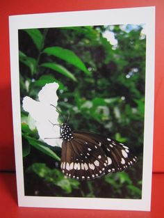 Handmade Card Any Occasion with photo of a brown, black and white butterfly on white flower