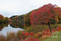 Fall Reflection on Lake Eastman in Rochester NY by William Norton