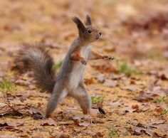 Hey you! Yeah, you! Come back here  & fight like a squirrel, you coward! ~Ninja Squirrel