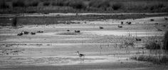 randyherring posted a photo:  Cosumnes River Preserve