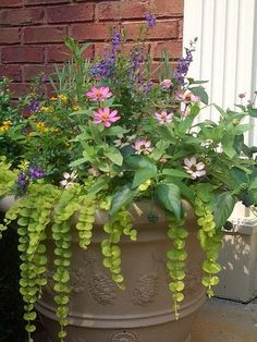 An assortment of flowers in planter by Gmomma