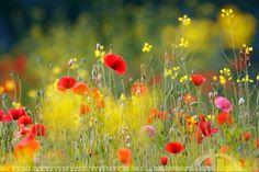 United Colours of Summer by thrumyeye.deviantart.com on @deviantART