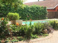 4 Bedroom House, Family Room, Solar, Garden, Plants, Beautiful, Garten, Family Rooms, Gardens