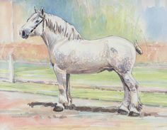 Boulonnais watercolor from the Dutch book on draft horses, The Trekpaard