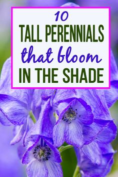 These tall shade perennials will fill the gap between ground covers and bushes in your shade garden with beautiful flowers and foliage #fromhousetohome shade garden  #shadeperennials #shadeplants #perennialgarden