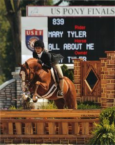 All About Me - Welsh Pony - Hunter