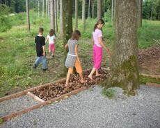 Erlebnispfade | kinderregion.ch Plants, Hiking Trails, Explore, Interesting Facts, Planters, Plant, Planting