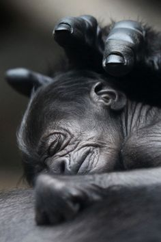 Even the Momma animals are amazed by their sleeping children. : )