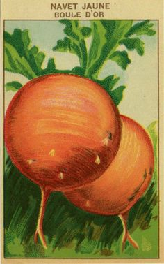 Antique French Seed Pack Label Botanical Lithograph Root Vegetable France 2 | eBay
