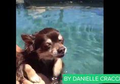 Dogs Teach Us Stuff | Video