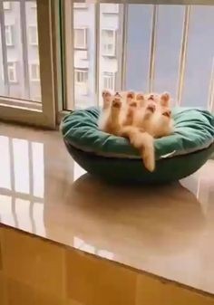 cute animal videos Aw four little paws Cute Baby Cats, Cute Little Animals, Cute Cats And Kittens, Cute Funny Animals, Little Dogs, Kittens Cutest, Funny Cute, Cute Babies, Adorable Dogs