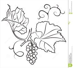 A Branch Of Grapes. Royalty Free Stock Images - Image ...