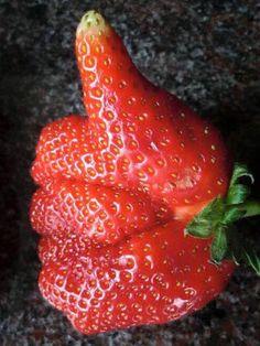 Les fruits et légumes aux formes bizarres sont tendance. Ils reviennent en force face à la dictature du calibrage obligatoire opéré dans les rayons de supermarchés. On les appelle aussi les gueules cassées car ils défient les normes en vigueur et grandissent comme ils veulent au gré des caprice...