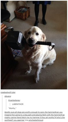 This dog. This hammer.