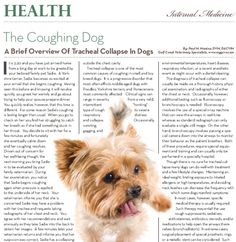 article in pets