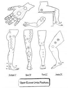 Limbs_Positions
