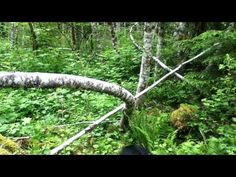 Bigfoot: More Awesome Tree Structures, Gifting & Whistles with Barb & Gabby