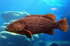 64 Ideas for wallpaper desktop sea fish Iphone Wallpaper Glitter, Fish Wallpaper, Wallpaper Iphone Disney, Trendy Wallpaper, Marvel Wallpaper, Wallpaper Desktop, Background Vintage, Background Images, Pc Backgrounds Hd