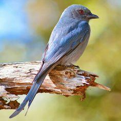 Pretty Bird in spring time