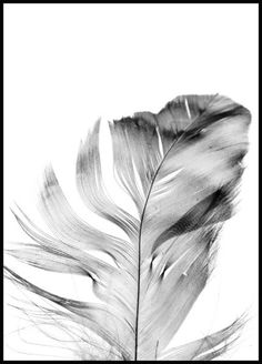 Feather Poster - Posterstore.se