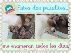 Gatos, Coco, Gina, Mascotas