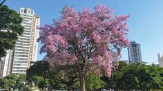 #drzewo #kwiaty #flowers #flores miłego weekendu. Bom fim de semana. Happy weekend. by ert1953 http://ift.tt/1WIryJO