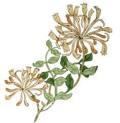 Honeysuckle by William Morris