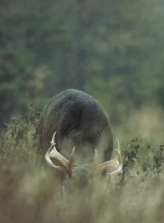 A deer shaking off rainwater - gifs Deer Hunting Videos, Baby Animals, Funny Animals, Wild Animals, Whitetail Deer Pictures, Dry Sense Of Humor, Deer Family, Shake It Off, Hilarious