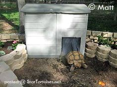 Make a heated home to keep your outdoor tortoise warm! Select a small shed that will easily accommodate your tortoise and cut out a hole for the doorway. Tortoise Cage, Tortoise House, Tortoise Habitat, Turtle Habitat, Baby Tortoise, Sulcata Tortoise, Giant Tortoise, Tortoise Turtle, Lizard Habitat