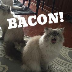 I want bacon!!!