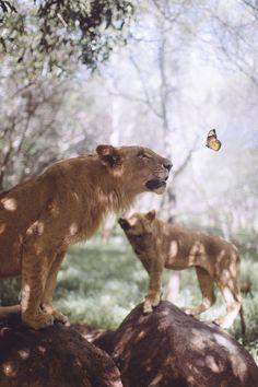 Butterfly - Voikärpänen