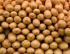 Хранение картофеля в зимний период http://www.agroxxi.ru/zhurnal-agromir-xxi/stati-rastenievodstvo/hranenie-kartofelja-v-zimnii-period.html  Если вам посчастливилось работать на земле, то вы не понаслышке знаете, какой же это тяжелый и кропотливый труд. Особенно много внимания к себе требует картофель