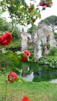 Ninfa/italy. One of my favourite gardens in all the world