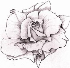 Rose Drawing - White Rose by Mary Simms Pencil Art Drawings, Tattoo Drawings, Drawing Sketches, Rose Drawings, Tattoos, Drawing Step, Drawing Drawing, Sketching, Rose Sketch