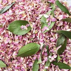 All our Confetti is 100% Natural, Biodegradable, Earth Friendly, Completely Natural & So Pretty. We do not use any artificial dyes or colourings in our Confetti, our petals are exactly as nature intended them to be making, them safe to use around children and wildlife. You will find Roses of some sort in most wedding flowers and as they are such a beautiful and versatile flower. #confetti #weddingconfetti #biodegradableconfetti #pink #pinkaesthetic #pinkwedding #weddinginspo #weddingsupplier Biodegradable Confetti, Biodegradable Products, Confetti Bars, Wedding Confetti, Pink Aesthetic, Rose Petals, Dyes, Color Schemes, Wedding Flowers