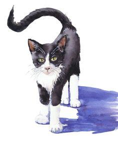 Gatito/ Kitty.  Watercolor - acuarela by Isabel Mariasg.