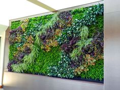 Green Walls are at the cutting edge of design and are safe to install on almost any structure, indoors and outdoors.