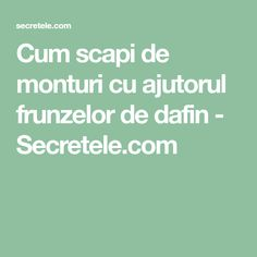 Cum scapi de monturi cu ajutorul frunzelor de dafin - Secretele.com How To Get Rid, Metabolism, Good To Know, Health Tips, Remedies, Health Fitness, Knits, Hacks, Medicine