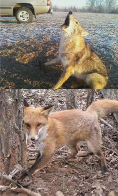 Petition – Ban Trapping! | GarryRogers Nature Conservation The people that do this should have it done to them!!