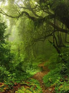 Enchanted Forest WALL MURAL, Green Forest Wallpaper, Large Wall Mural, Self Adhesive Peel & Stick Photo Mural, Magical Forest Wall Covering – Diwan Altaf – wallpaper hd Forest Wallpaper, Photo Wallpaper, Wallpaper Desktop, Adhesive Wallpaper, Hd Desktop, Disney Wallpaper, Nature Wallpaper, Iphone Wallpapers, Wallpaper Quotes