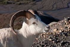"""""""Don't mind the horns."""" 