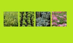 Zobacz jak profesjonalnie dbać o swój ogród http://bojanowskiszkolka.pl/ , http://bojanowskiszkolka.pl/oferta , http://bojanowskiszkolka.pl/galeria&nr=17&page=1