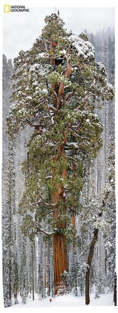 Sequoia National Park, California Mosaic composed of 126 images