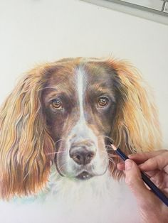 One of my recent dog pencil portrait drawings