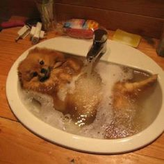 Can i please bathe in your sink? :)